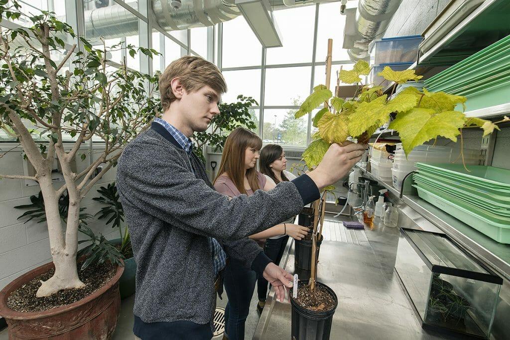 MTSU undergraduate research grant recipients Nolan Jolley, front, Amanda Uhls and Aimee Wilson