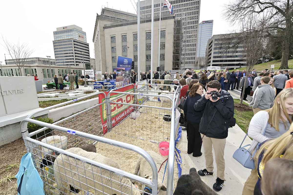 MTSU's School of Agriculture brought young pigs (seen in the second pen) and plenty of chocolate milk for Ag Day on the Hill, which coincided with MTSU Day on the Hill at the Tennessee State Capitol in Nashville Tuesday, March 12. Most of the ag-related activities happened outdoors between the Capitol and the Cordell Hull Building. (MTSU photo by Andy Heidt)