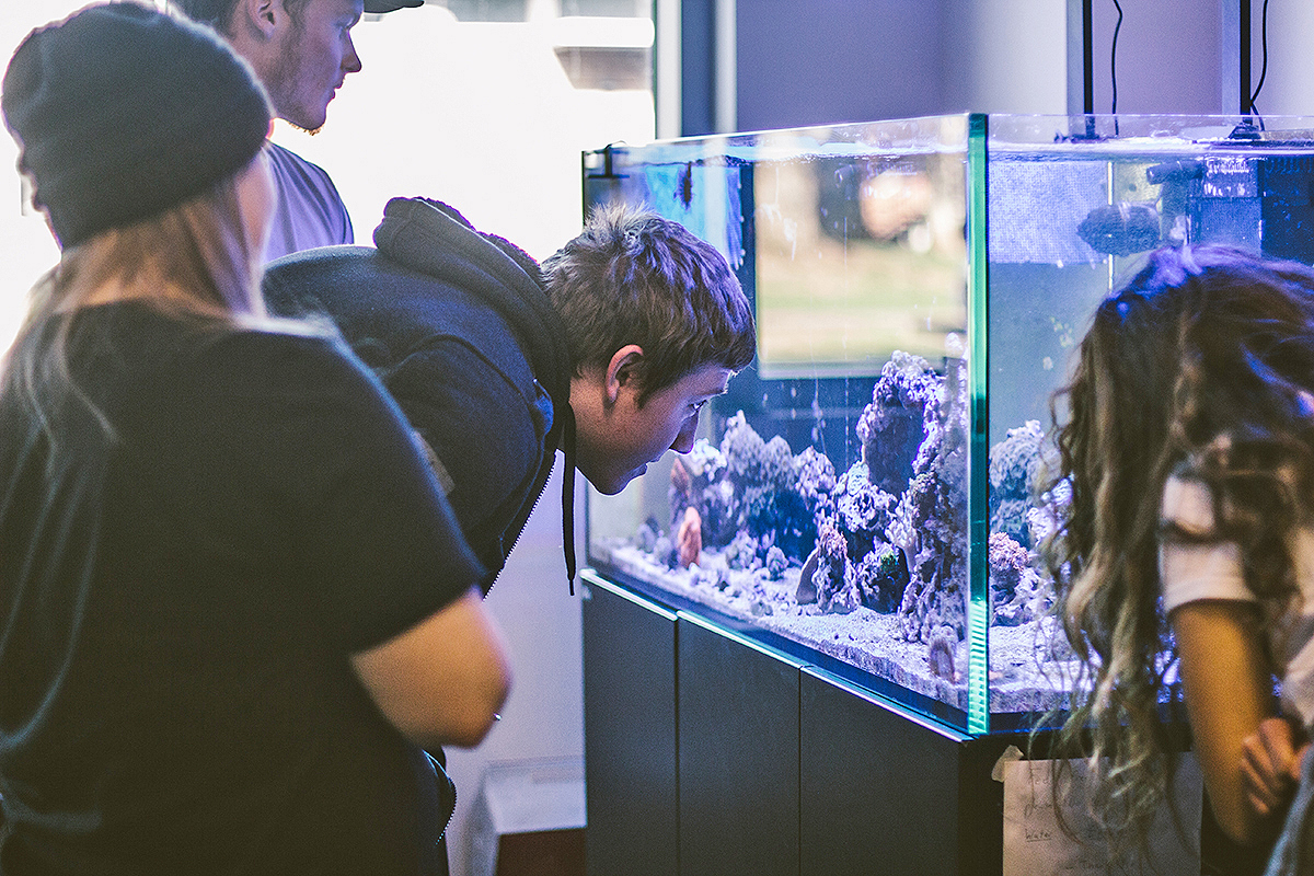 Along with other MTSU students, junior biology major Tyler Suttman, center, of Apison, Tenn, near Ooltewah and Chattanooga, peers into the state-of-the-art aquarium in a Science Building teaching lab during his invertebrate zoology class. His biology concentrations are organismal biology and ecology.