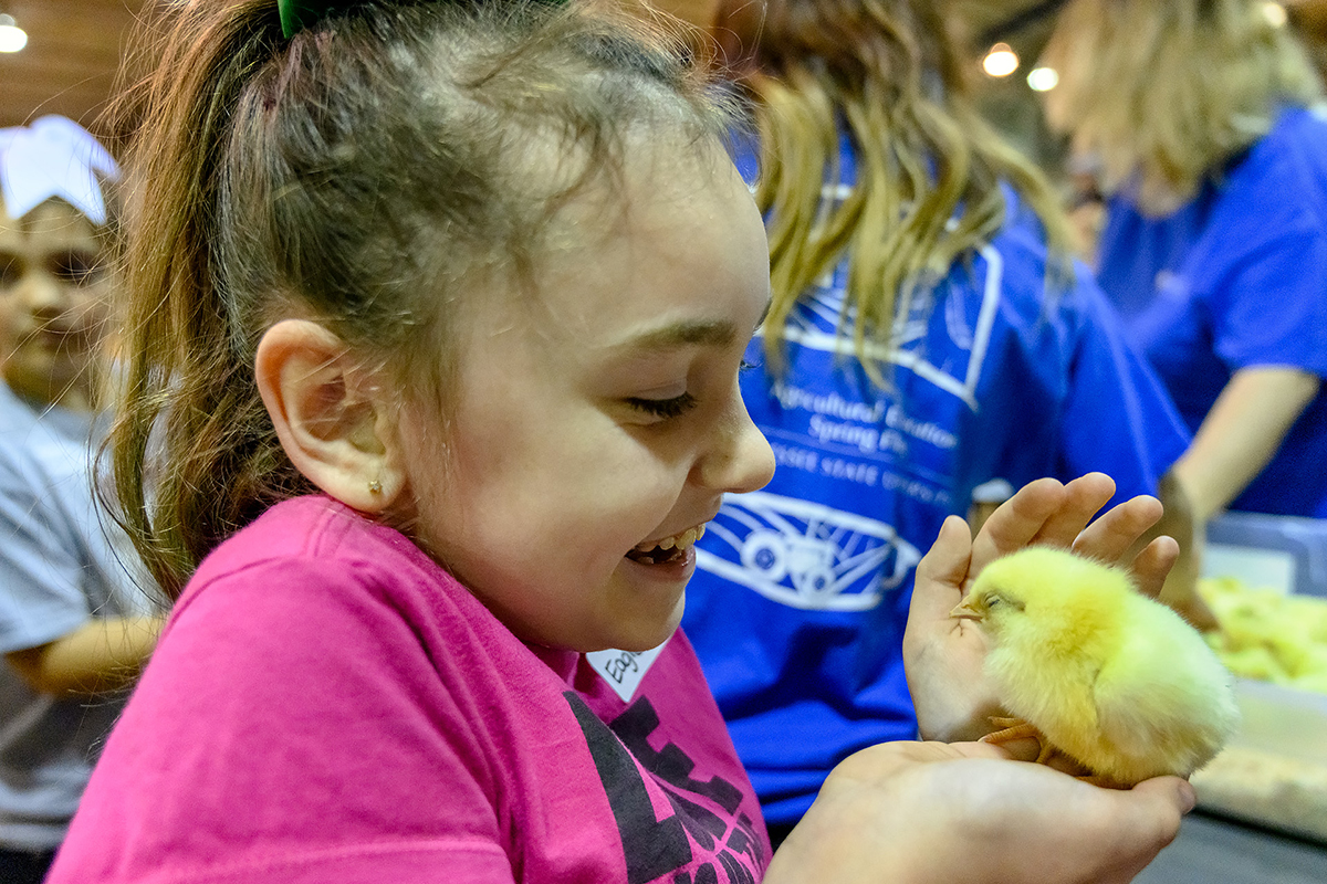Zoe Southerland, 8, a second-grader at Eagleville School, enjoys holding a baby chick Tuesday (April 16) during the fifth annual MTSU Ag Education Spring Fling in the Tennessee Livestock Center. Nearly 800 elementary school children learned about farm life during the two-hour field trip.