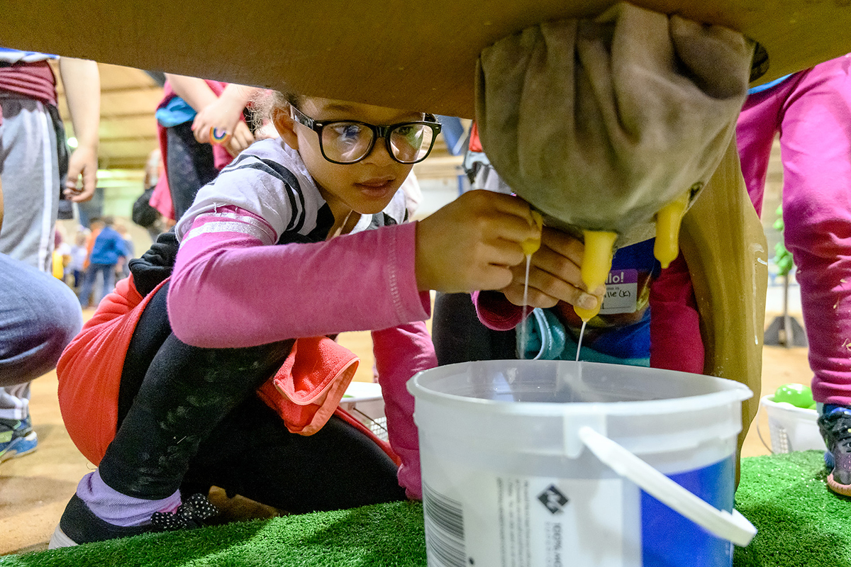 Aveena Solomon, 6, a kindergarten student at Eagleville School, learns about the milking process on a dairy farm Tuesday (April 16) in the Tennessee Livestock Center as part of the annual MTSU Ag Education Spring Fling. Students from Rutherford, Cannon and Warren county schools participated.