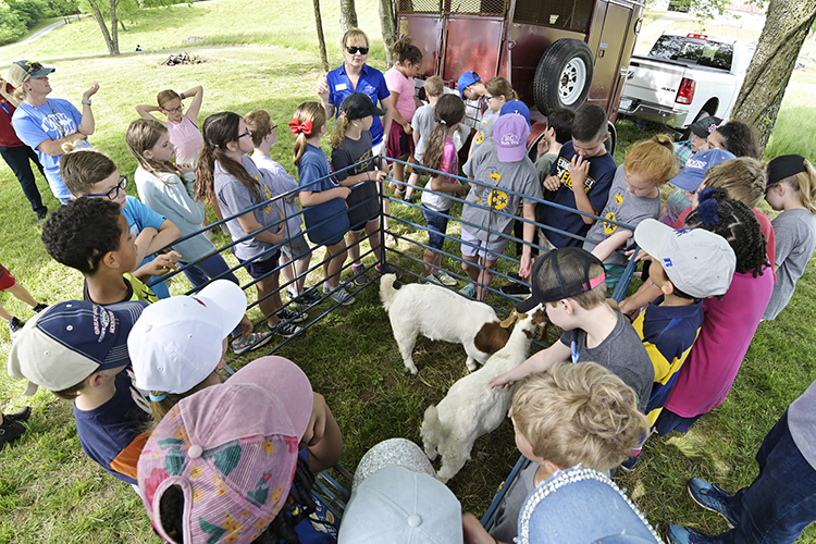 "Third graders from the Murfreesboro City Schools learn about goats at MTSU's Experiential Learning and Research Center Wednesday, May 8, during the school system's ""Day on the Farm"" visit to the university's farm in Lascassas, Tenn. The trip is part of the school system's ""Farm2School"" initiative as well as a longstanding educational partnership with MTSU. (MTSU photo by Andy Heidt)"