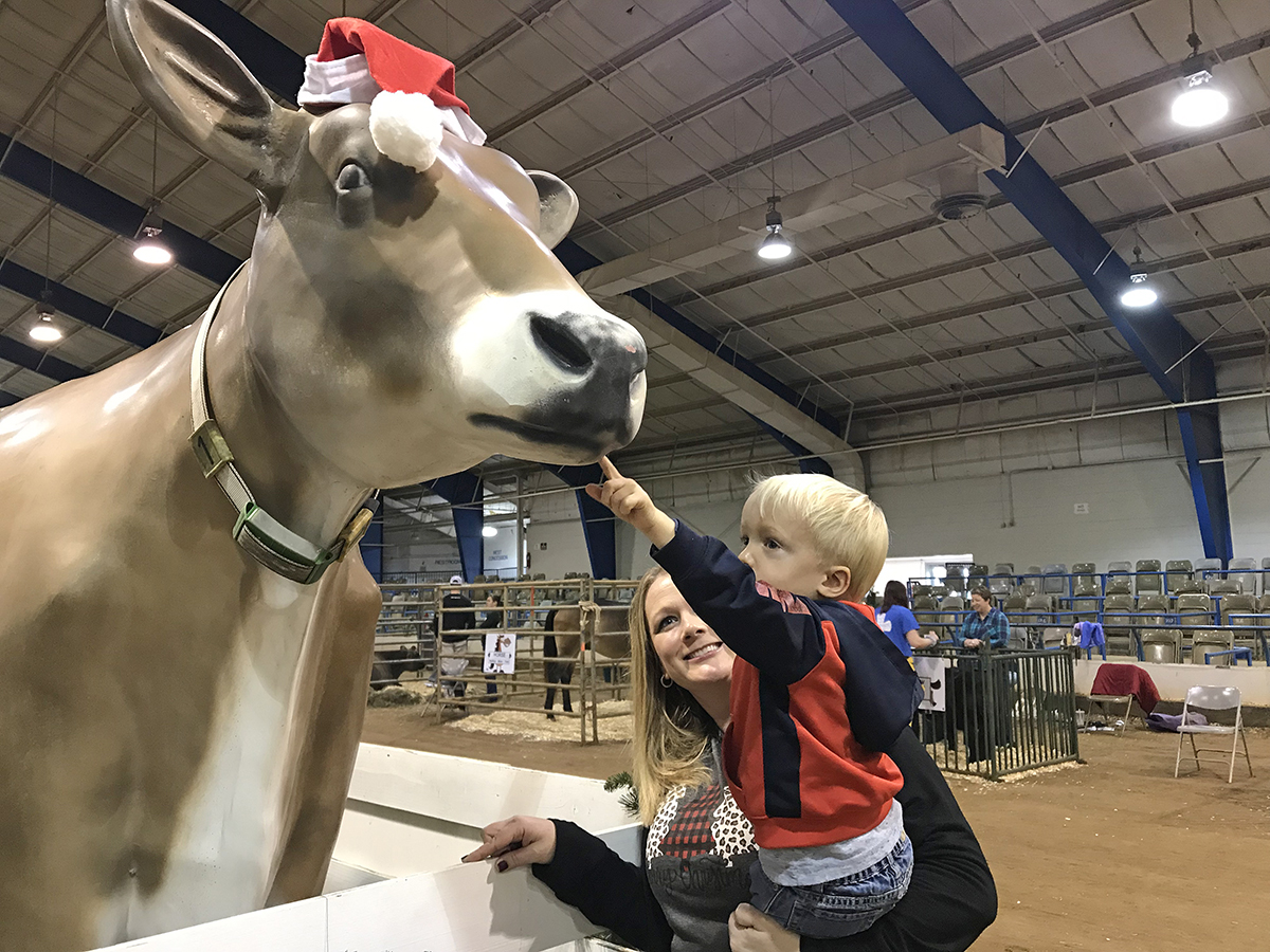 Kase Curtis, 2½, right, of Rockvale, Tenn., touched the face of the oversized MTSU Dairy Science Club cow during the recent Winter Village in the Tennessee Livestock Center on Greenland Drive. He was being held by his mother, Lacey Curtis. (MTSU photo by Randy Weiler)