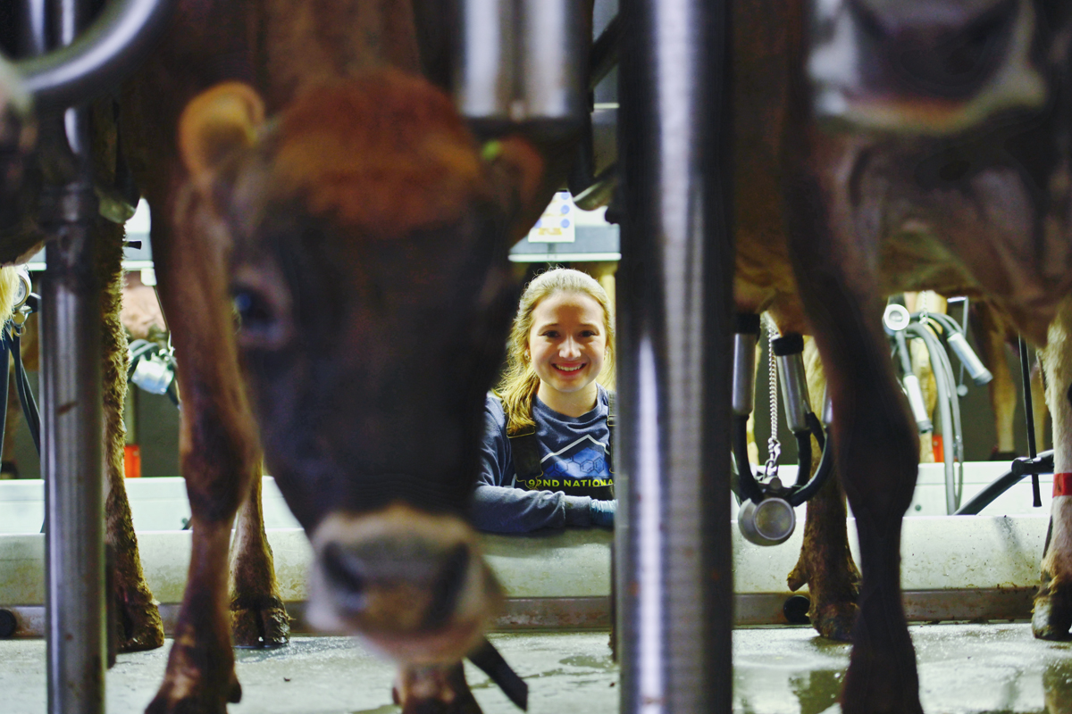 MTSU sophomore animal science major Erin Coleman of Readyville, Tenn., waits for some of the School of Agriculture's dairy cows to finish the milking process recently at the MTSU Farm Laboratory in Lascassas, Tenn. (MTSU photo by Cat Curtis Murphy)