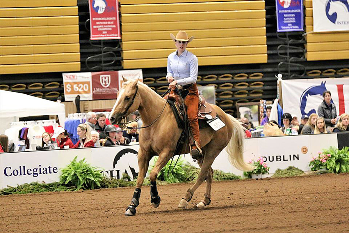 MTSU senior MC Wade of Germantown, Tenn., guides her horse through the paces during a previous equestrian competition. Wade qualified or was selected to compete in postseason events, which were canceled by organizers because of the coronavirus pandemic. (Submitted photo by Mark King)