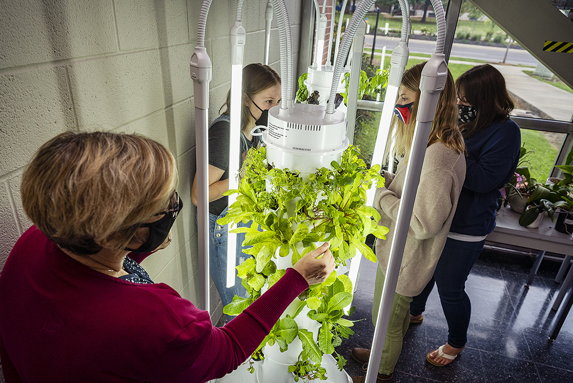 MTSU dietetics students take care of salad greens and herbs growing in two innovative soil-free towers in the lobby of the Elllington Human Sciences Building. From left, Teresa Wilberscheid, Montana Tomsett, Maegan Harris, and Beth Heise. (MTSU photo by Andy Heidt)