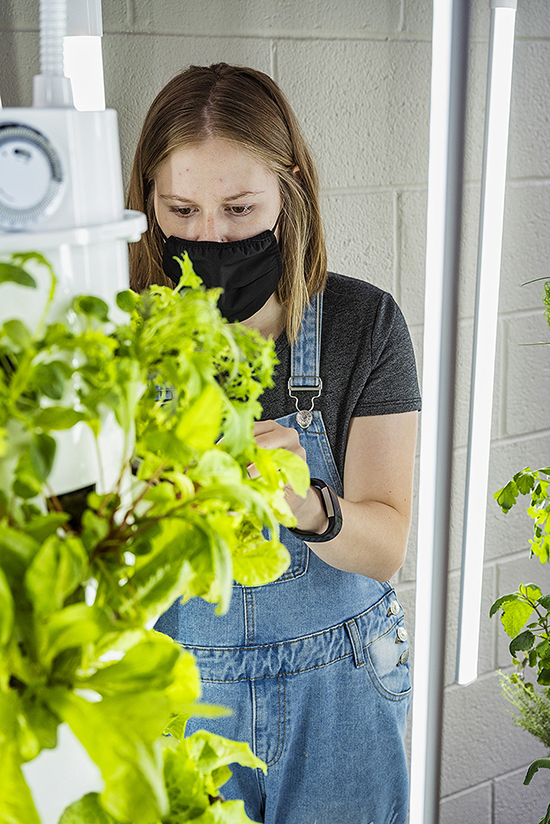 MTSU dietetics student Montana Tomsett tends to greenery she and other students are growing in towers in the lobby of the Ellington Human Sciences Building. They will give the produce to the St. Clair Senior Center in Murfreesboro along with nutrition and cooking information. (MTSU photo by Andy Heidt)