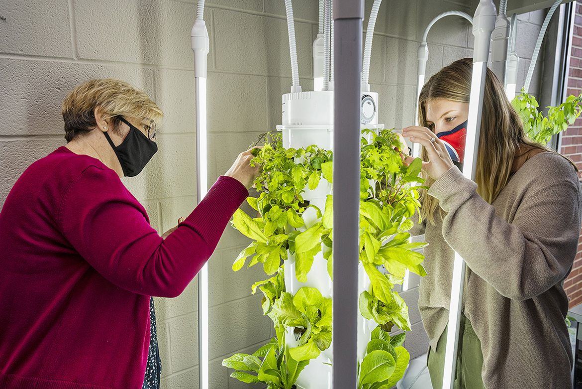 Students Teresa Wilberscheid, left, and Maegan Harris tend to plants they are growing in towers in the lobby of the Ellington Human Sciences Building. They will give the salad greens and herbs to the St. Clair Senior Center along with nutrition information. (MTSU photo by Andy Heidt)