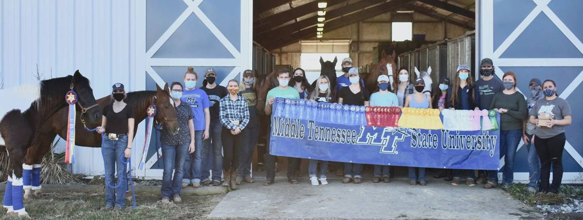 MTSU equestrian team riders collected 18 blue ribbons and other awards at the IHSA competition at Murray State University in Kentucky during the fall season. (Submitted photo)