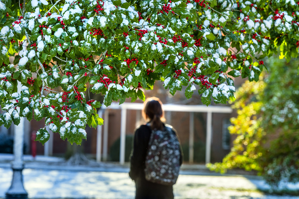 Wearing a backpack, an MTSU student walks in the snow and past a holly tree on campus. MTSU will be closed from Dec. 24 through Jan. 3, 2021, for the Christmas and New Year's holidays. (MTSU file photo by J. Intintoli)