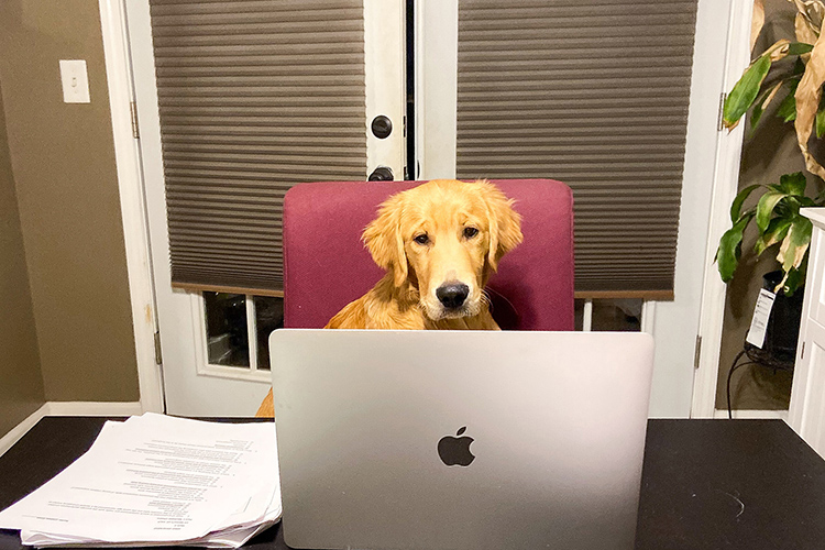 Clifford the golden retriever helps his owner, Middle Tennessee State University graduate student Lindsey Vogel, make the best of a challenging year. (Photo courtesy of Lindsey Vogel)