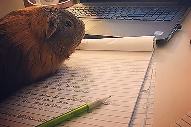 Gershwin the hamster joins in on the fun with Ellie Smith, a Middle Tennessee State University graduate student, as she works toward her degree. (Photo courtesy of Ellie Smith)