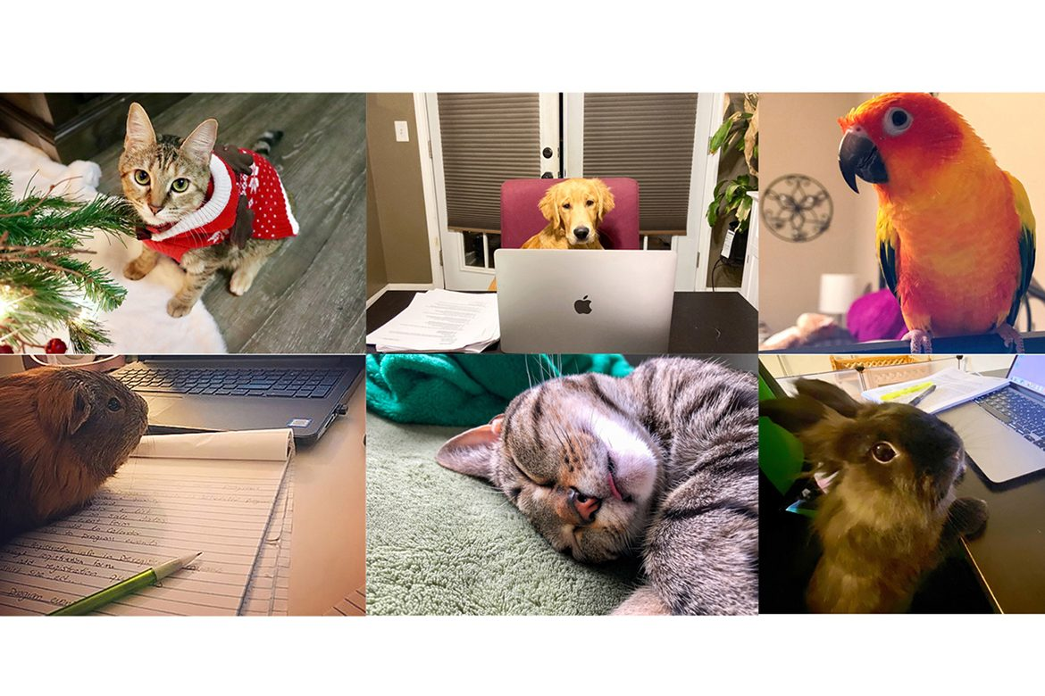 Middle Tennessee State University graduate students shared photos of the pets who helped them get through learning from home during COVID.