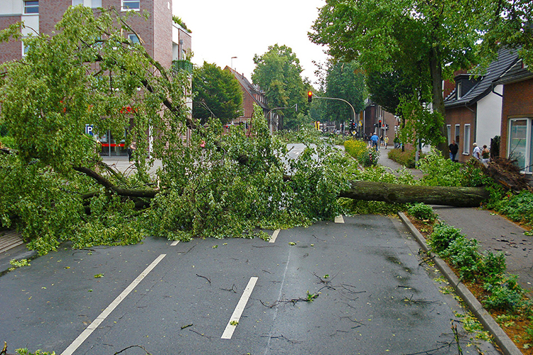 A tree uprooted by high winds in an electrical storm blocks a city street in this 2010 file image from Pixabay. Middle Tennessee State University tests its tornado siren system on the first Monday of every month at 11:20 a.m. to ensure it's in working operation if dangerous weather approaches the area. (image by Jan Mallande/Pixabay)