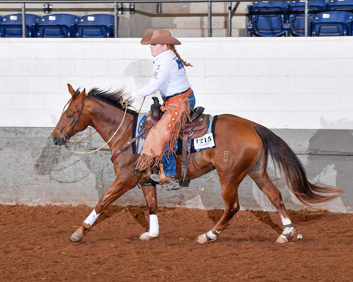 Riding BC Pennys From Tari, Jordan Dillenbeck, a junior horse science major from Murfreesboro, Tenn., finished as National Novice Pleasure Champion and National Novice Reserve Champion Cow Horse in the National Reserve Champion, Novice division at the 2021 ASHA National Show April 16-17 in the Nolan County Coliseum in Sweetwater, Texas. (Submitted photo by High Cotton Promotions)