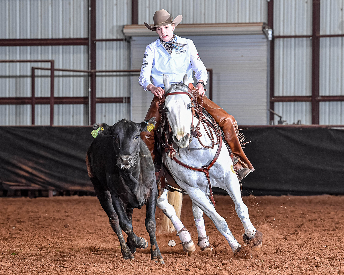 Riding Dontjacwithmyspook Lindsay Gilleland, a senior horse science major from Powder Springs, Ga., earned ASHA National Non-Pro Trail & Pleasure Champion, Collegiate Limited Reserve Champion Cow horse and sixth all-round Collegiate Limited Non-Pro honors. The competition was held April 16-17 in the Nolan County Coliseum in Sweetwater, Texas. (Submitted photo by High Cotton Promotions)