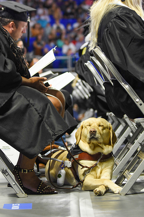 """An MTSU student's service dog, a """"Class of 2021"""" bandanna around its neck, relaxes Saturday, Aug. 7, while waiting to join her in crossing the Murphy Center stage to accept her diploma during the university's summer 2021 commencement ceremony. MTSU presented degrees to 825 new graduates of the August Class of 2021 at the event; there was no official tally of dog treats distributed. (MTSU photo by GradImages)"""