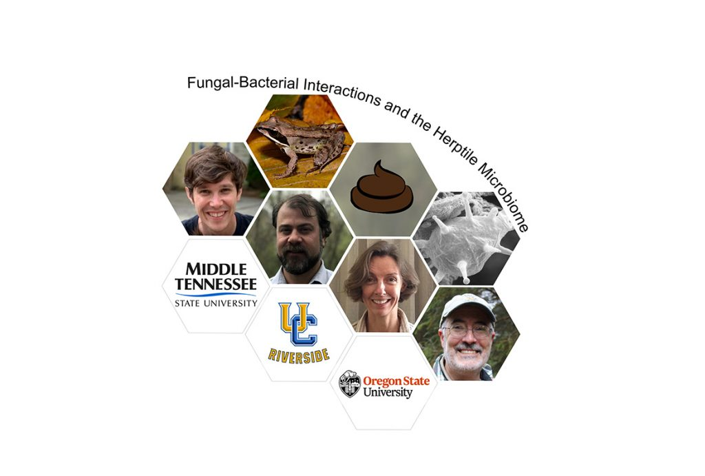 Donny Walker, Middle Tennessee State University assistant biology professor, far left, recently procured an $870,000 portion of a $2.61 million National Science Foundation grant to research the microbiomes of wild animals in collaboration with other researchers from the University of California Riverside and Oregon State University. (Graphic illustration courtesy of Donny Walker)