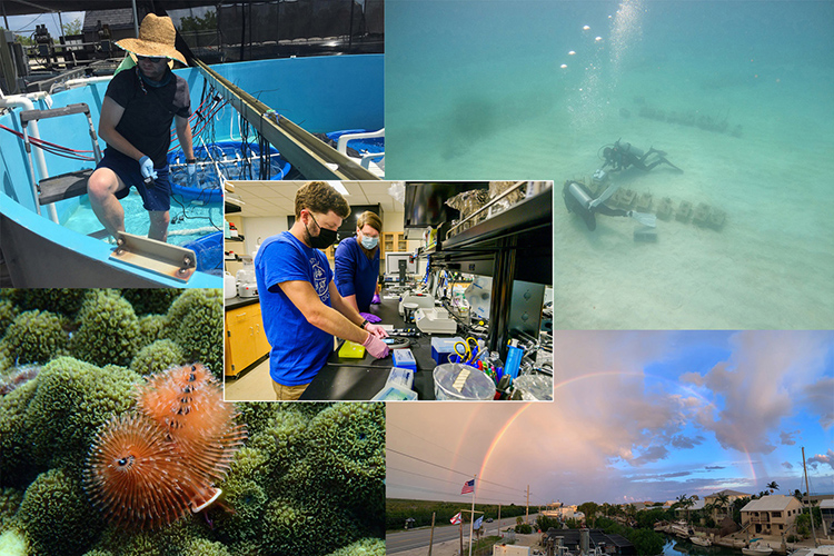 Cole Easson, Middle Tennessee State University research assistant professor, uses his National Science Foundation grant to fund his marine sponge research in the Florida Keys and bring his student research team along with him. (MTSU graphic illustration by Stephanie Barrette)